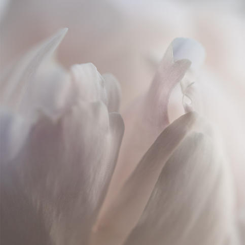 Title: Perfume by Shirene Briell