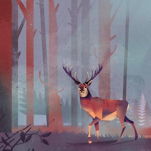 Title: Dear Deer by Dieter Braun