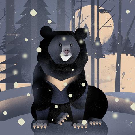 Title: Black Bear by Dieter Braun