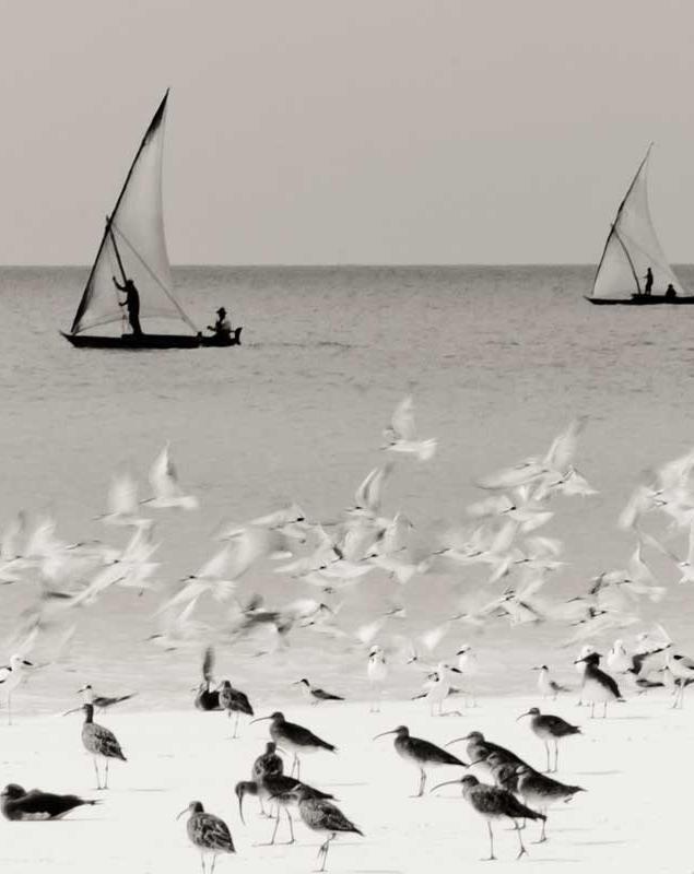 Title: Kamera Sail Cape Town