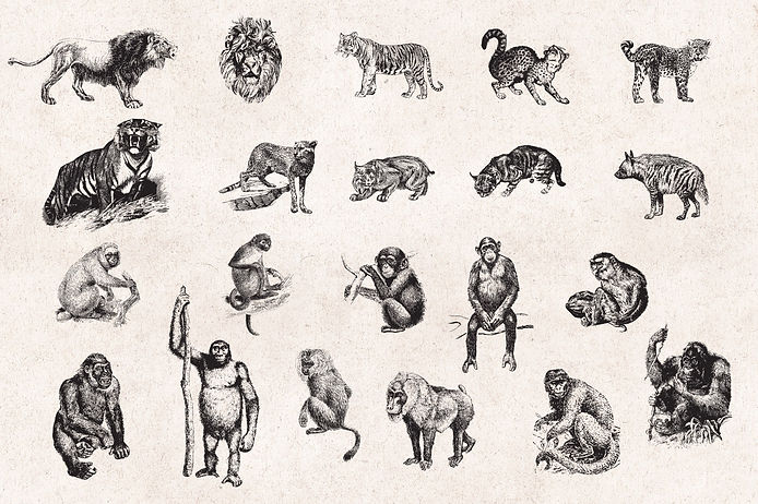 Wild-Animals-Vintage-Engraving-Illustrat