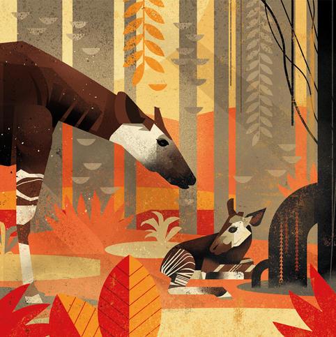 Title: Okapi by Dieter Braun