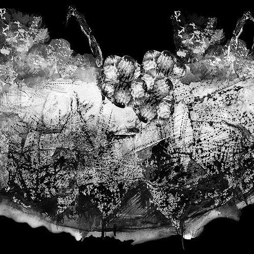 series. agua | title. barnacles