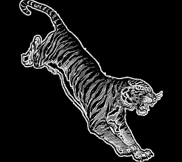 kisspng-felidae-white-tiger-drawing-clip