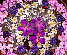 flower-mandala-closeup-whole-1-1000x668.