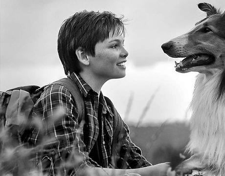 lassie-come-home-2020 (1).jpeg