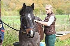 Chiropraktik für Pferde und Reiter