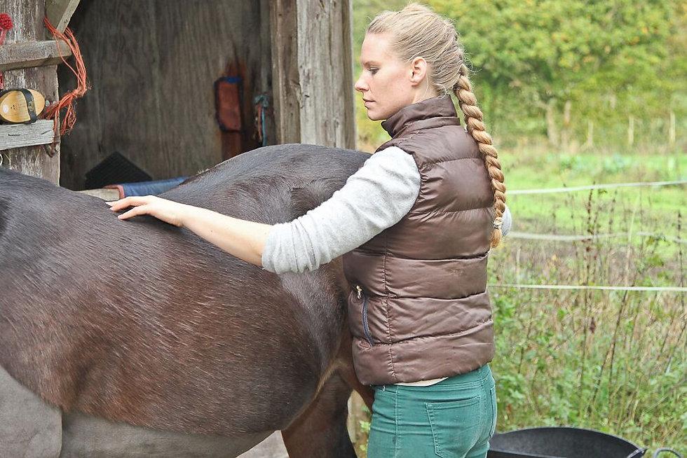 Chiropraktik, Osteopathie, Craniosacral, Akupunktur, Blutegel und Hofmag Therapie für Pferde