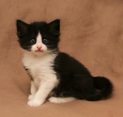 Cat Stevens 5w.JPG
