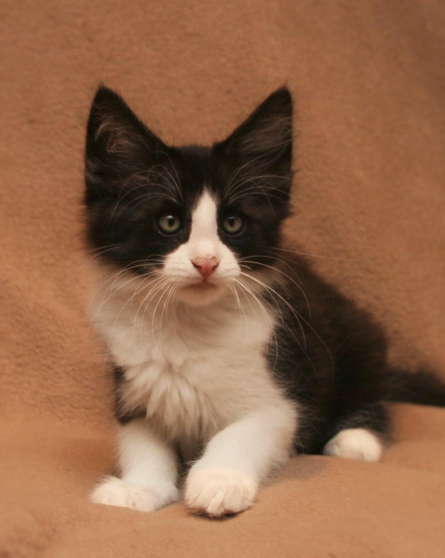 Cat Stevens 10w_4.JPG
