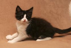 Cat Stevens 10w_3.JPG