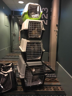 Cats in transport