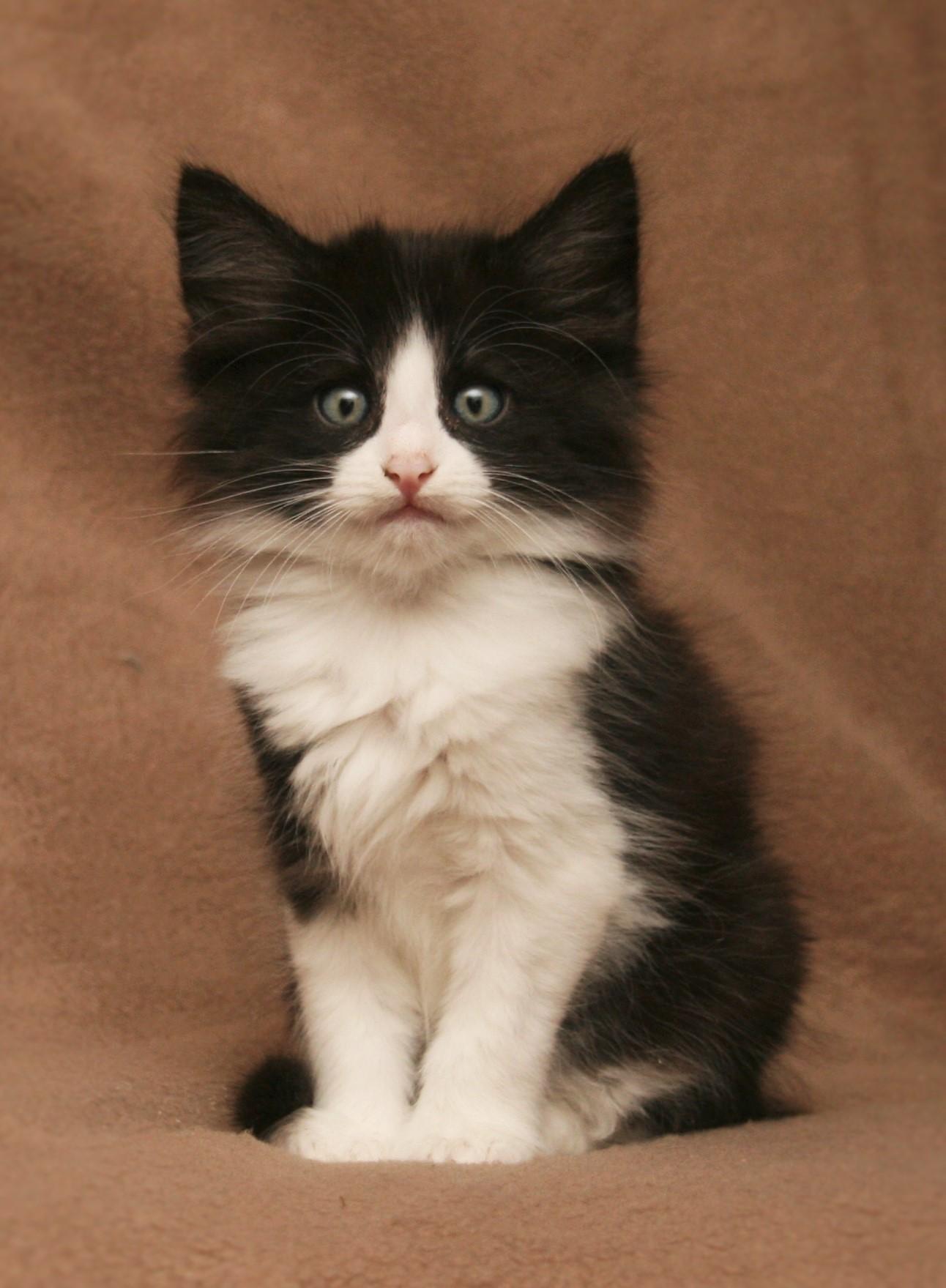 Cat Stevens 7w_3.JPG