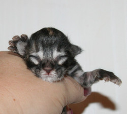 Enigma 1 day old