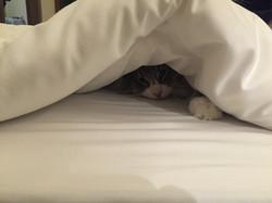 Kazaar loves the hotelbed