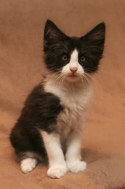 Cat Stevens 10w.JPG
