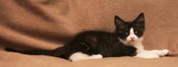 Cat Stevens 11w_2.JPG