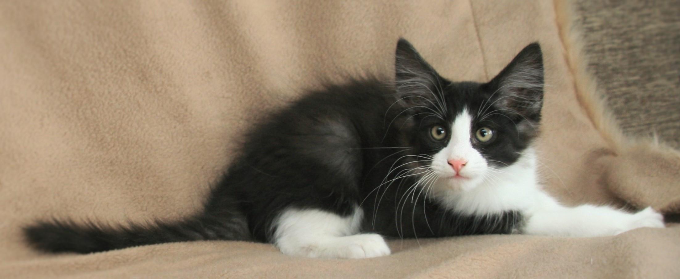 Cat Stevens 12w.JPG