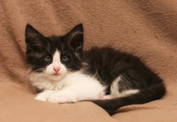 Cat Stevens 9w_3.JPG