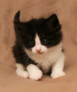 Cat Stevens w5.JPG