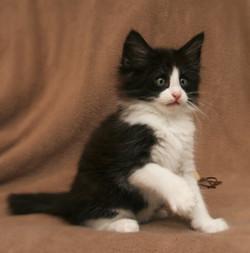 Cat Stevens 8w.JPG