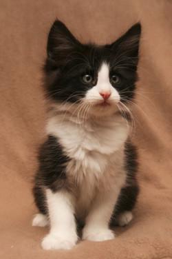 Cat Stevens 9w.JPG