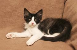 Cat Stevens 13w.JPG