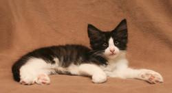 Cat Stevens 11s_3.JPG