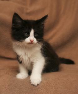 Cat Stevens 8w_1.JPG