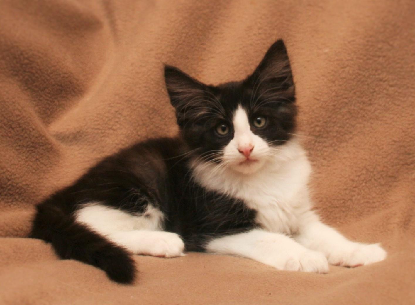Cat Stevens 11w.JPG