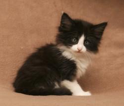 Cat Srevens 7w.JPG