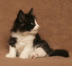 Cat Stevens 7w_1.JPG