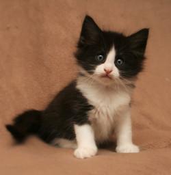 Cat Stevens 6w.JPG