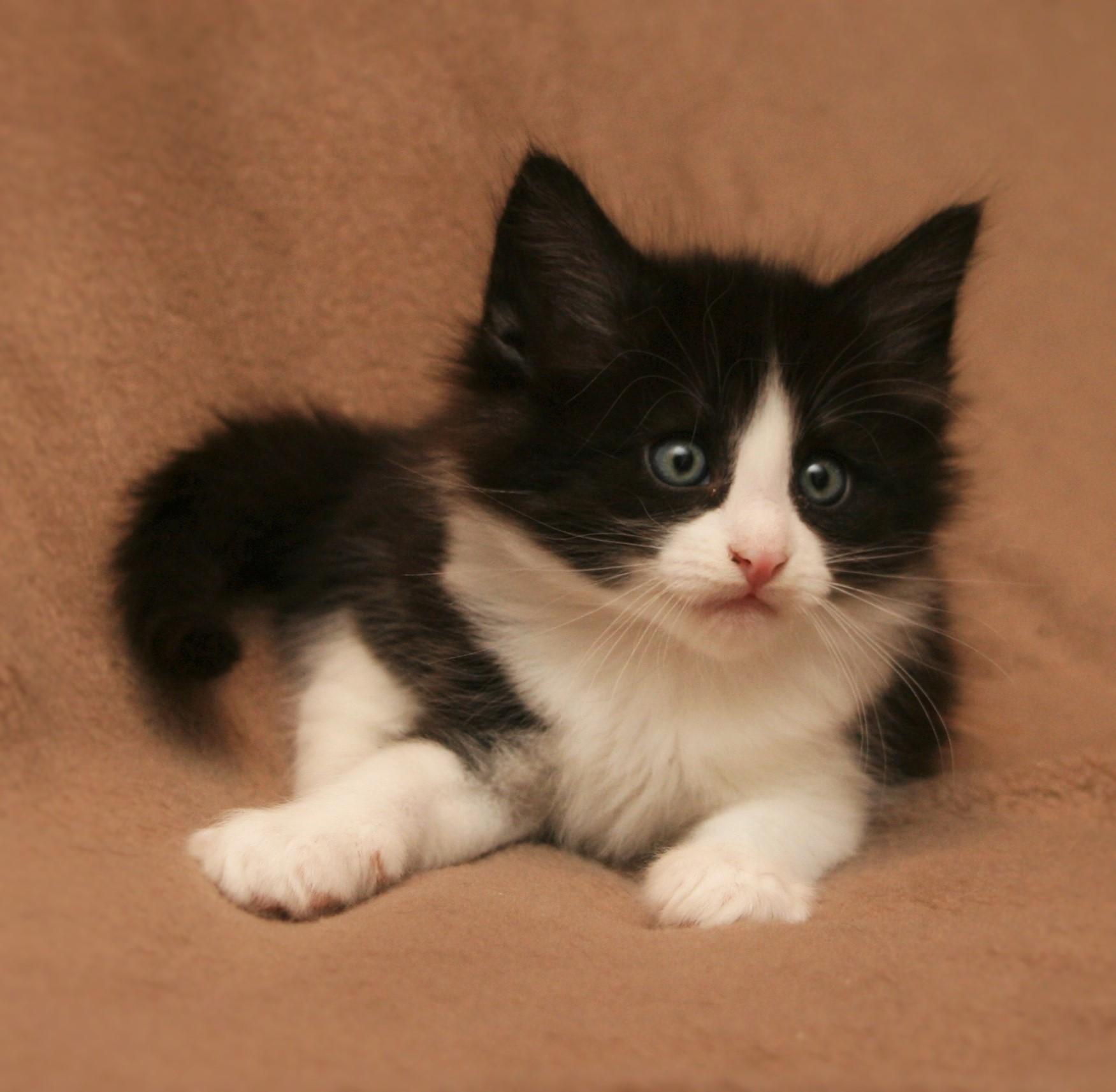 Cat Stevens 6w_1.JPG