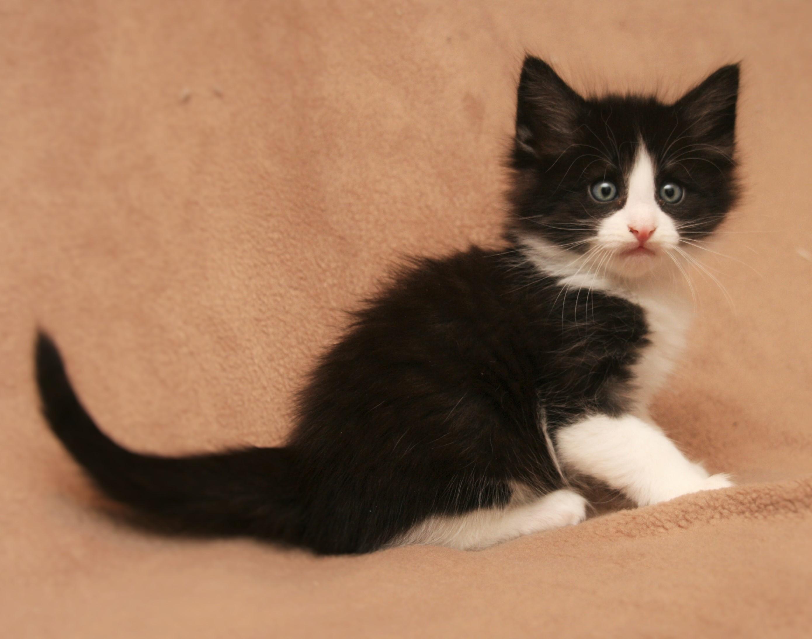 Cat Stevens 6w_2.JPG
