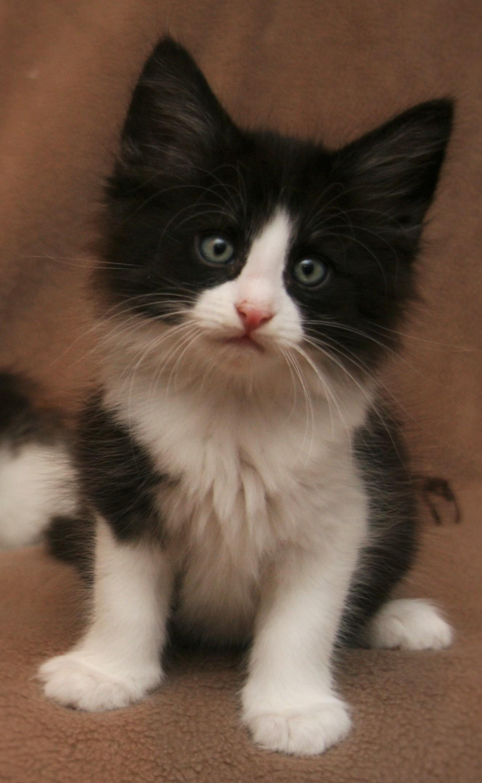 Cat Stevens 8w_3.JPG