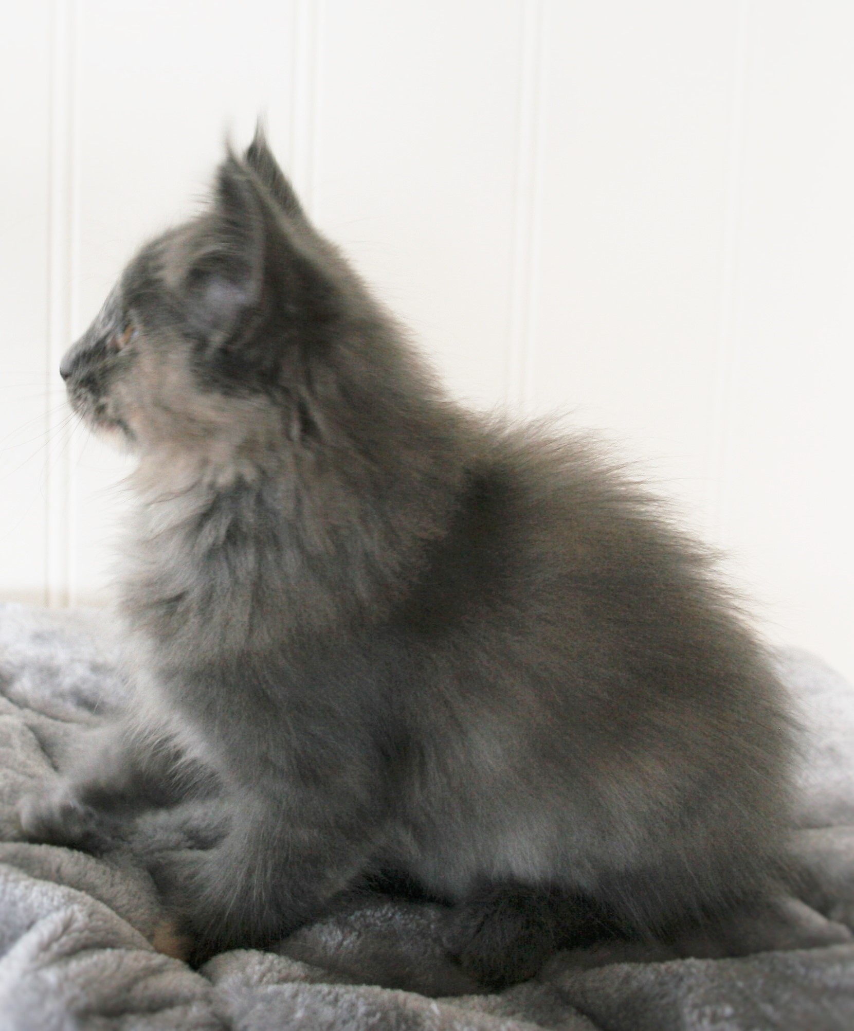 Octavia 10w_3