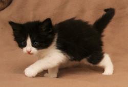 Cat Stevens 5w_1.JPG