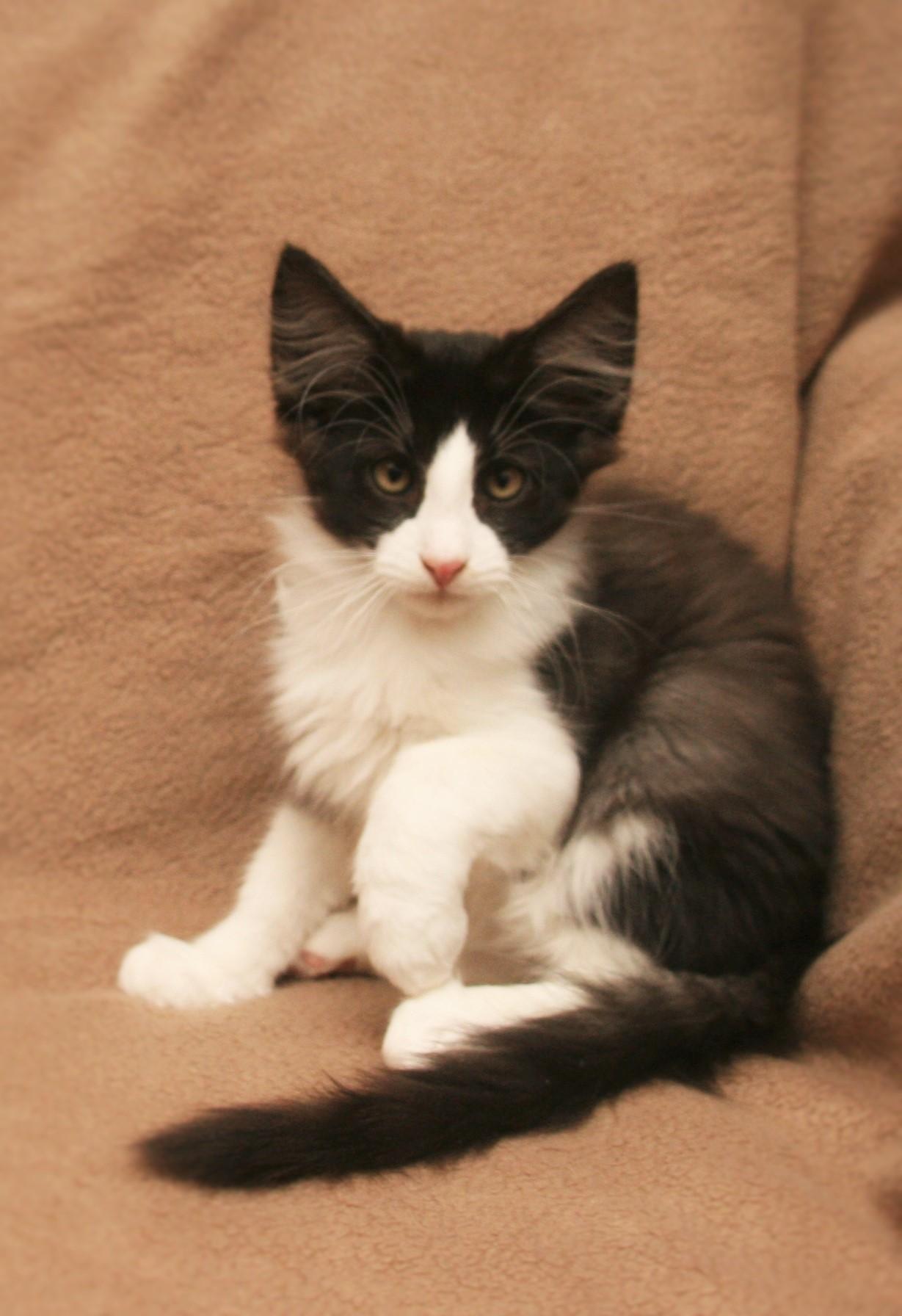 Cat Stevens 13w_1.JPG