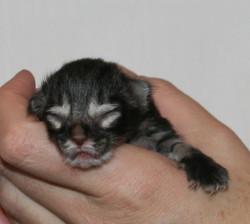 Enya 1 day old