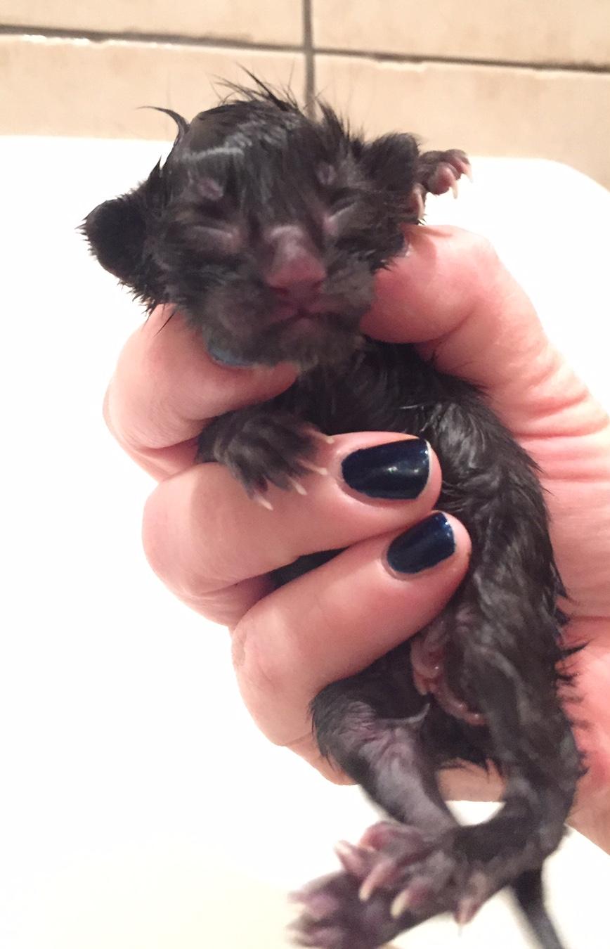 Iggy Pop - newborn