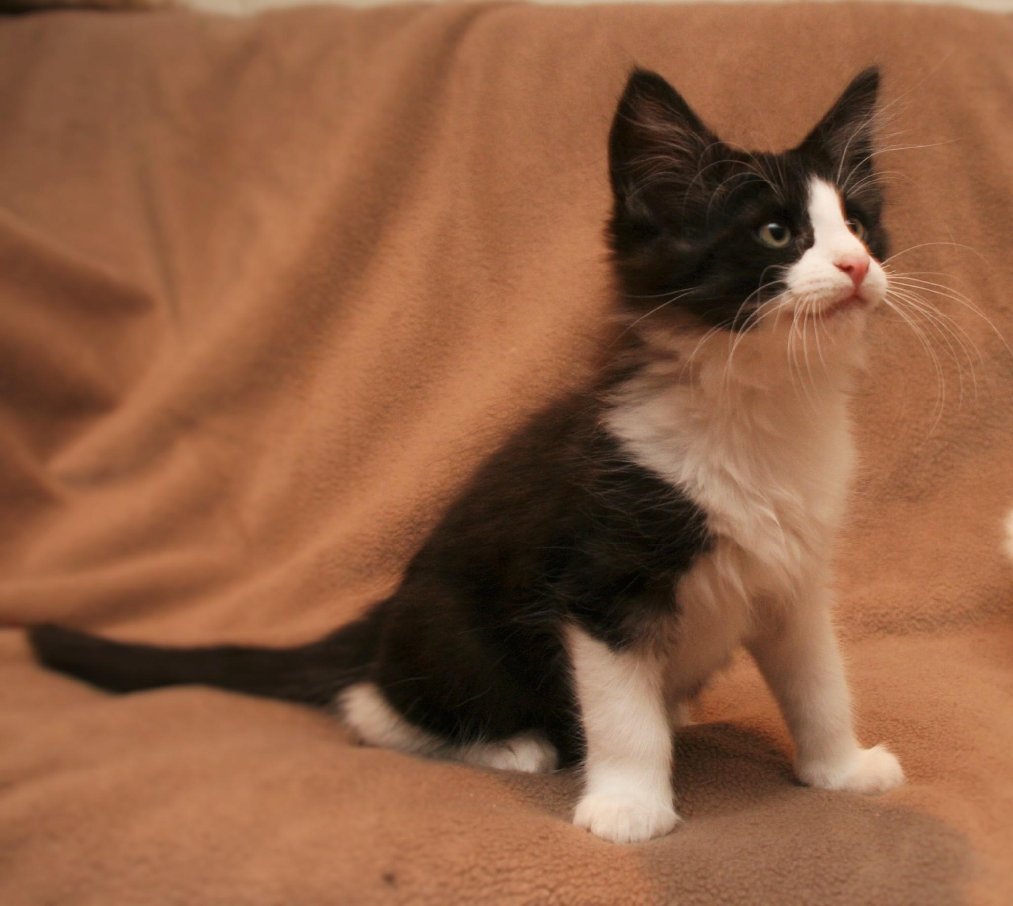 Cat Stevens 11w_1.JPG