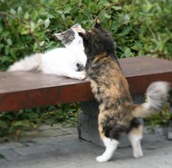 Sofie_Kitty.JPG