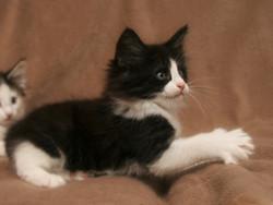 Cat Stevens 8w_2.JPG