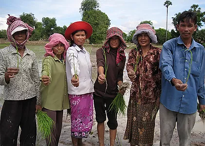 farmers with rice1.webp