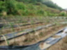Jiangxi _Page_1_Image_0001.jpg