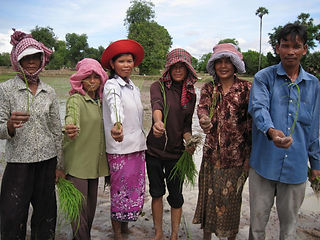 farmers with rice.jpg