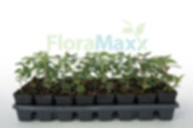 FloraMaxx Plant Tray