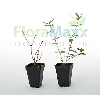 FloraMaxx Plants