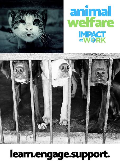 Animal Welfare Postcard - Side 1.png